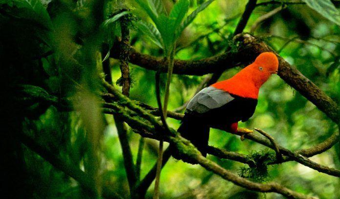 Áreas naturales protegidas estarán abiertas