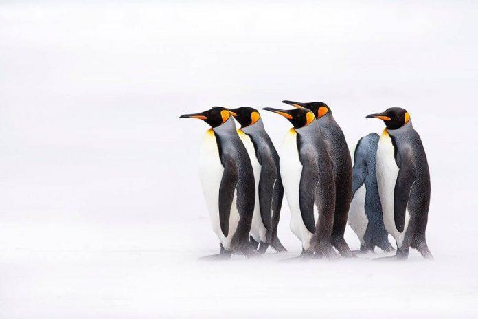 Turismo en las Islas Malvinas post Covid 19