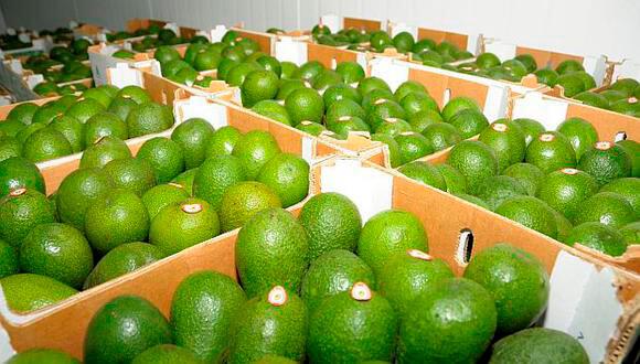 Exportaciones peruanas de palta registran récord histórico.
