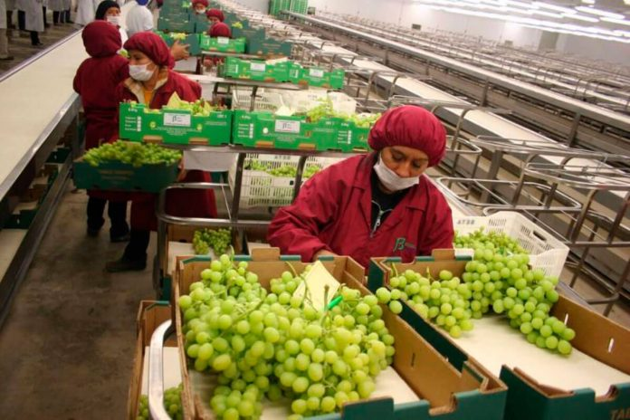 Perú logró que 18 regiones aumentaran sus exportaciones entre enero a mayo de 2021.