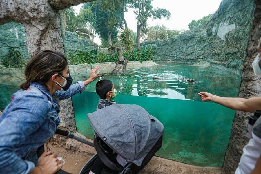 Visita con tu familia los atractivos del Parque de las Leyendas.